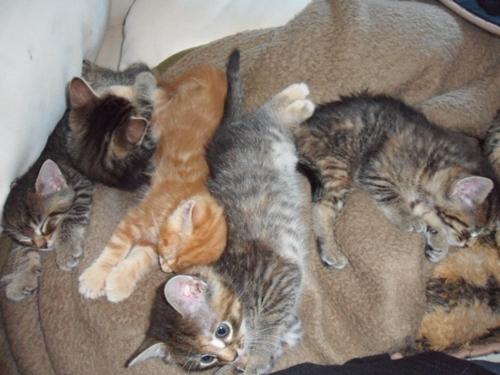 Tierrettung – Seite 18 – Katzen-Heimat-Blog