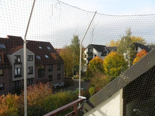Katzensicherer Balkon Katzen Heimat Blog