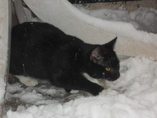 Schnee 9