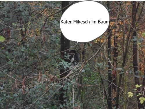Mikesch im Baum