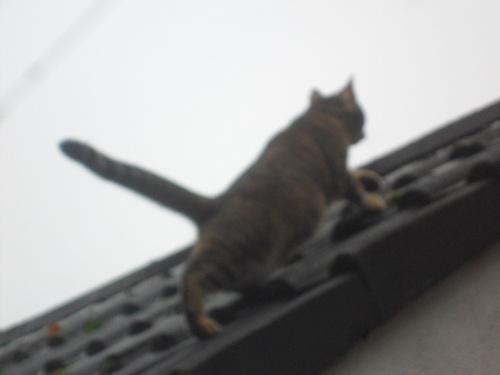 Romina auf dem Dach