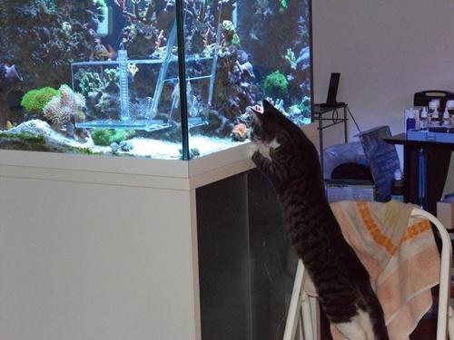 Meili und Fische 2