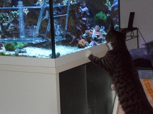 Meili und Fische 3