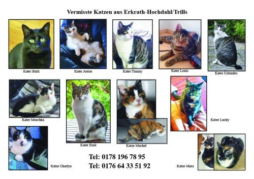 Suchplakat 11 Katzen